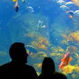 No Wetsuits Required at the Aquarium