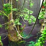 A Four Story Rainforest