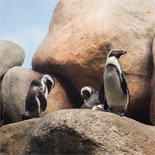 Explore the wonders of the Natural World, come face to face with live animals and specimens