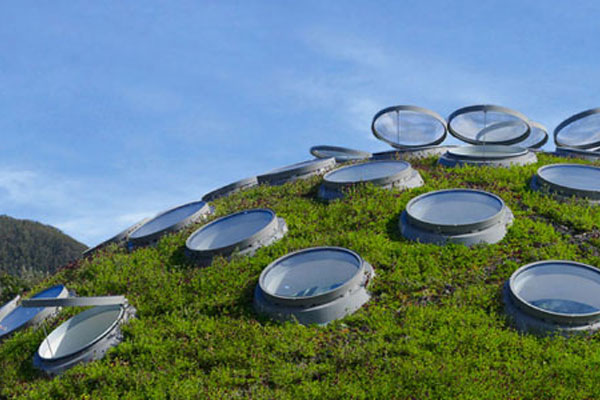 The California Academy of Sciences Living Roof