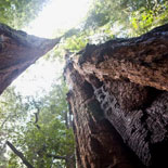 Visit The Great Muir Woods, The Home Of The Redwoods