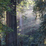 See Muir Woods, Sausalito and San Francisco In A Day!