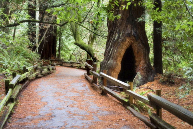 Narrated tour to Muir Woods and Sausalito