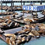 Meet sea lions at Pier 39