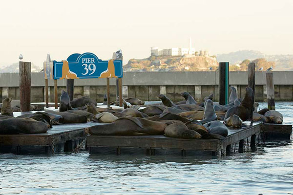 The Sea Lions camped out at PIER 39