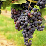 Visit 3 popular wineries