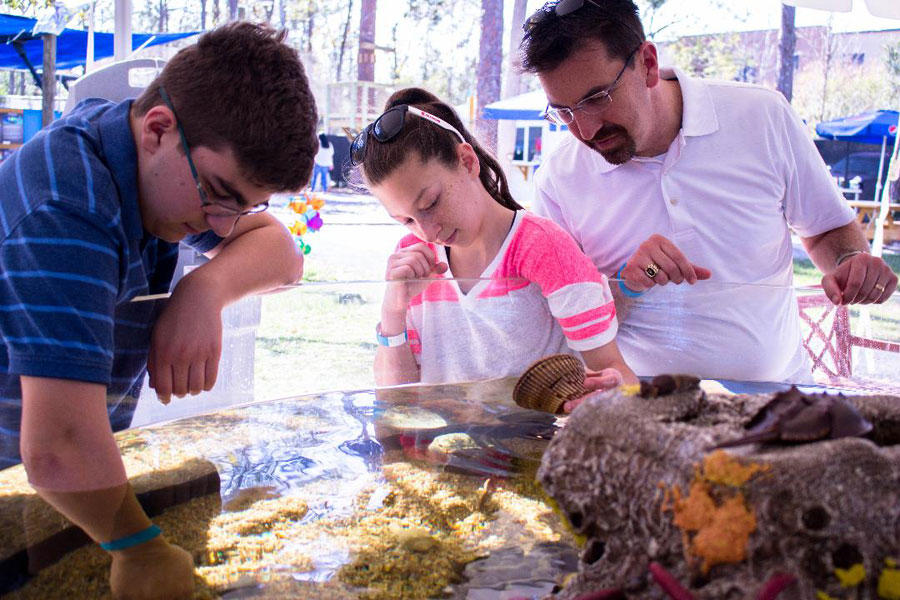Touch invertebrates, Starfish & Horseshoe Crabs