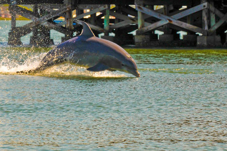 See wild bottlenose dolphins