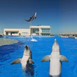 Marineland Dolphin AdventureMarineland Dolphin Adventure-Behind the Seas Park Pass