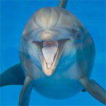 Enjoy viewing magnificent bottlenose dolphins