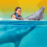 Experience an exciting belly ride with our dolphins