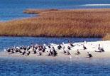 See Florida's Natural Habitats and Beautiful Seashores
