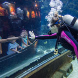The Florida Aquarium's mission is to entertain, educate and inspire stewardship about the natural environment.